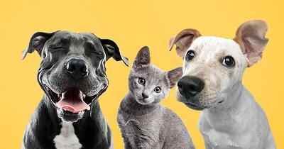 Cómo llevar a cabo una mudanza con mascotas